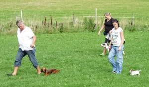 Stora och små hundar in action!