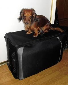 """packa pappas kappsäck""!"
