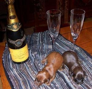Champagne-taxar!