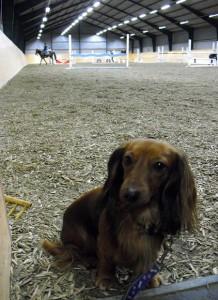 Stallhund!