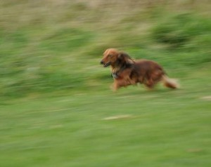 Full speed!