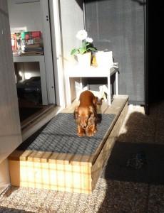 Hundsträck i solen!