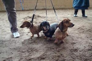 Bina,Molly och Frodo har koll!