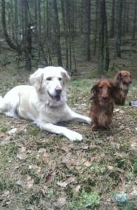 Tre vovvar i skogen.