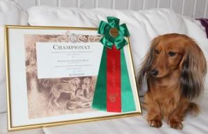Minnie med sin Championrosett!