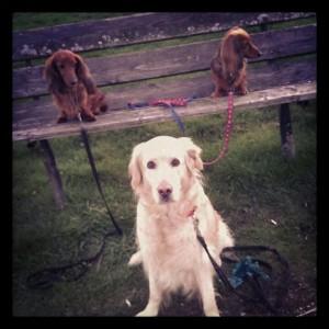 Tre påskhundar!