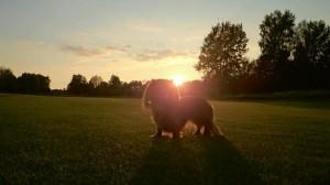 Sessan i den vackra solnedgången.