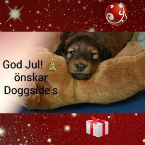 God Jul valp!