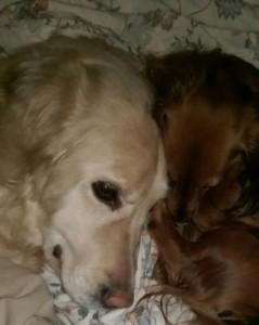 Tilla och Sessan i sovposition.Gott att vara två.
