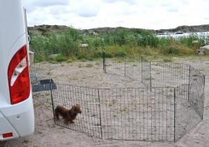 Vilken fin hundgård jag har med havsutsikt!