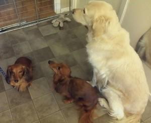 Sessan med sina hundkompisar.
