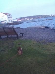 Å så en liten kisserunda på Marstrand.