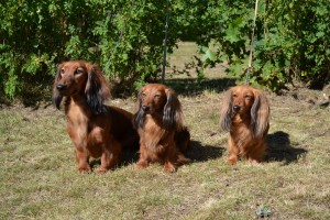 Sommarminnen med Stella,Sessan och Minnie.Foto:Helena Knez.