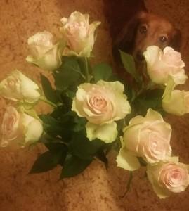 Alla Hjärtans Dag rosor till matte.Den finaste rosen är Sessan.