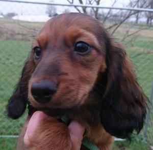 Här har vi sötnosen Fritz!
