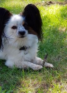 Hugo gillar också pinnar!