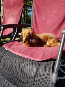 Husses stol är bäst på semestern!