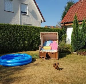 Lilla swimmingpoolen! Perfekt för en liten tax att svalka sig i....!