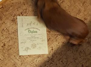 Hunden går ur bild och bryr sig noll om diplomet...!