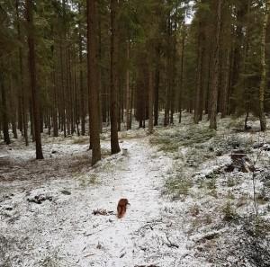 På en stilla skogspromenad.