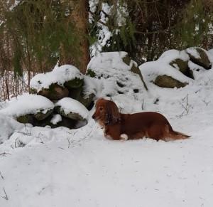 Våran snötax!