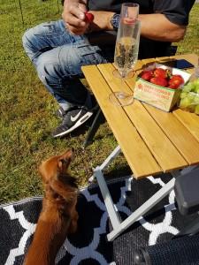 Bubbel och jordgubbar är en perfekt combo!