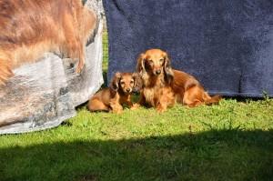 Lillie och Sessan i solgasset vid den fina Queeniefilten!