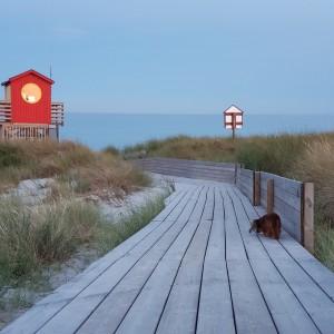 Egentid med Sessan en vacker kväll på stranden.