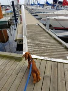 Sessan och jag tog en sväng i hamnen.
