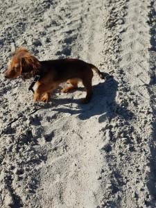 Lillie på besök i Sandis för första gången!
