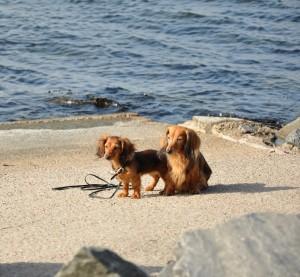 Lillie och Sessan vid havet.