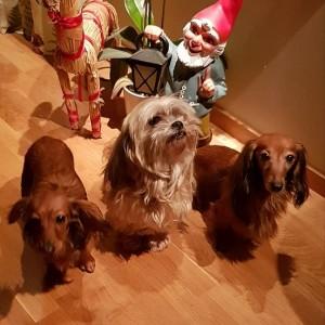 God Jul önskar Lillie,My och Sessan!