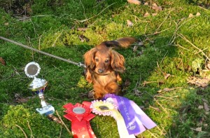 Hundens syns, men inte alla priser helt och hållet. Foto husse...
