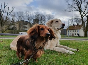 Finaste Lillie och Tilla på Kungälvspromenad. Foto:Katta