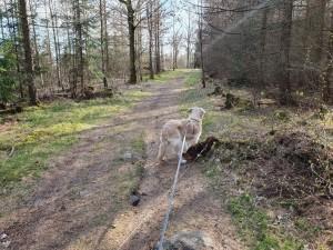 Med Tilla på promenad.Det gör livet lite lättare.