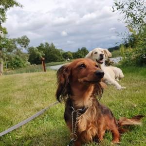Bästa vänner - Lillie och Tilla!