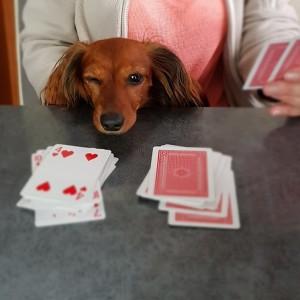 Det gäller att ha pokerface. Jag tror att matte fuskar....