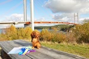 Lillie poserar vid Tjörnbron!