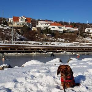 Mycket snö och klarblå himmel på Hedvigsholmen.