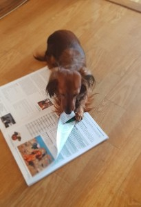 Hjälper matte att vända blad i tidningen....