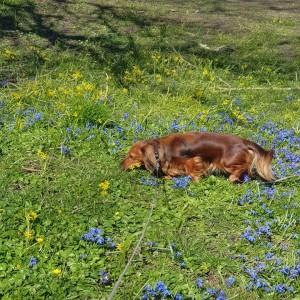 Näsan i blomsterbacken.