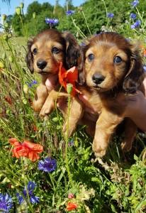 Så små och söta syrror Lilian och Liliana!