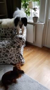 Vad gör du där uppe?!