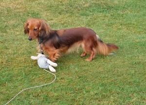 Finaste syrran Liliana.Den leksaken har även Lillie lyckats spara utan att gnaga sönder.