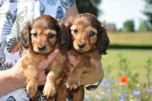 Alltså - hur söt får man lov att vara. Myran till vänster och Lilliana till höger.