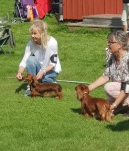 I BIS finalen med Pyttelie och Anita med Josa!Blev ingen placering, men massa hundmat och diverse priser blev det ändå.