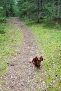 Liten Myra i stoooora skogen!