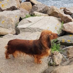 Nere vid havet med liten Myra.